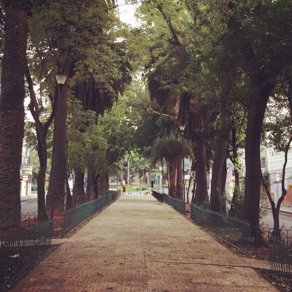 Avenue Nuevo Leon